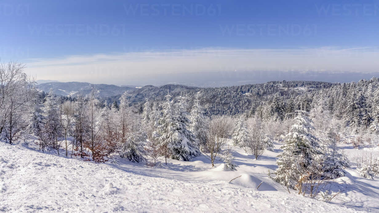 Germany, Baden-Wuerttemberg, Black Forest, snow-covered landscape - PUF000114 - pure.passion.photography/Westend61