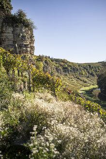 Germany, Baden-Wuerttemberg, Muehlhausen, vineyard in autumn - SBDF001400