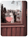 Cat at window - EVGF000985