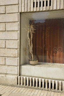Hungary, Budapest, Shop window and dried plant - BRF000809