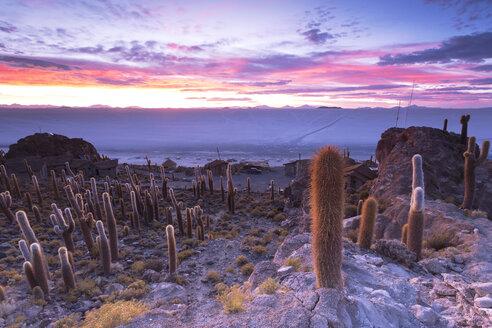 Bolivia, Salar de Uyuni, Isla Incahuasi - FPF000003