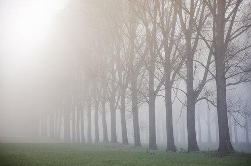 Germany, North Rhine-Westphalia, Neuss, fog in River Rhine meadows - GUFF000003