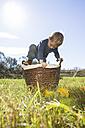 Little boy climbing into a wicker basket - OJF000067