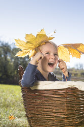 Little boy sitting in a wicker basket playing with autumn leaves - OJF000070