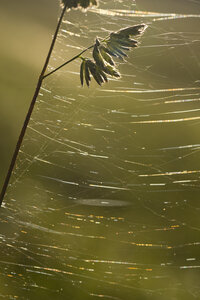 Cobweb in sunlight - YFF000264