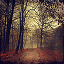 Germany, near Wuppertal, deciduous forest with bench in autumn, Textured effect - DWI000280
