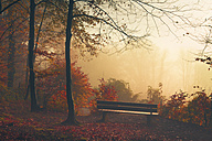 Germany, near Wuppertal, deciduous forest with bench in autumn - DWI000295
