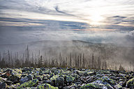 Germany, Bavaria, Lusen, Bavarian Forest National Park, Forest dieback and fog in autumn - STSF000581