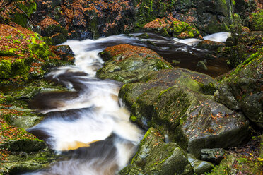 Germany, Bavarian Forest National Park, Steinbach gorge in autumn - STSF000597
