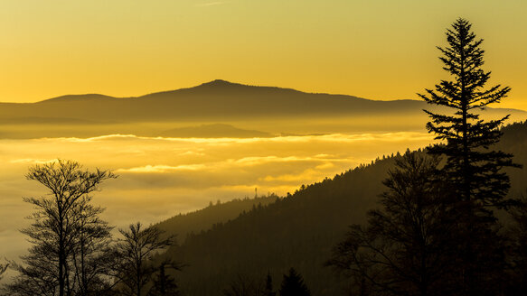 Germany, Bavaria, Bavarian Forest National Park, View from valley with waft of mist at sunrise - STSF000594