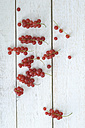 Red currants on white wood - ASF005488