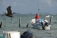 Mexico, Cancun, fishermen at Puerto Juarez and brown pelican - FLK000546