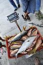 Mexico, Cancun, fishmonger weighing fish - FLK000553
