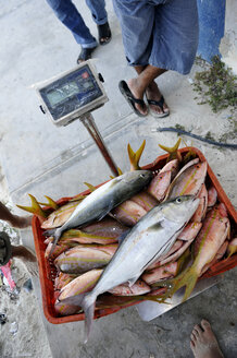 Mexico, Cancun, fishmonger weighing fish - FLK000553