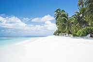 Maledives, Ari Atoll, view to empty dream beach with palms and beach loungers - FLF000571