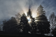 Germany, Bavaria, sunrise in Bavarian Forest - STS000617