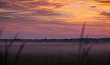 Netherlands, horses on pasture at sunrise near Ijsselmeer - FCF000499
