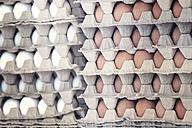 Egg cartons - LVF002316