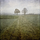 Field and trees in autumn - LVF002344