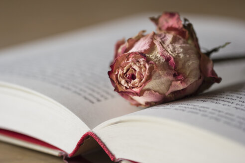 Dried rose blossom on opened book - YFF000267