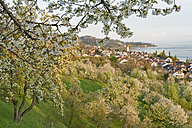 Germany, Baden-Wuerttemberg, Lake Constance, Sipplingen, blooming trees and townscape with church - SHF001779