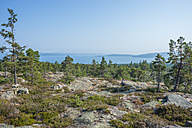 Sweden, Vaesternorrland County, Skuleskogen National Park, view from Slattdalsberget to Baltic sea - JBF000188