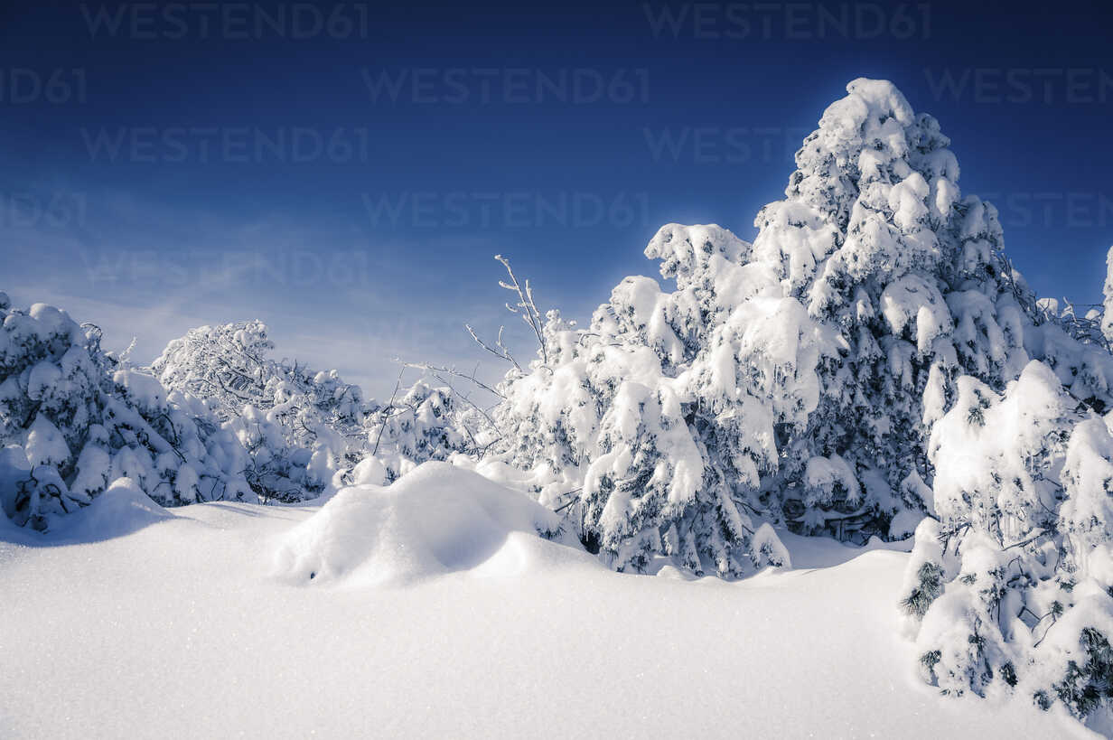 Germany, Baden-Wuerttemberg, Black Forest, snow-covered landscape - PUF000333 - pure.passion.photography/Westend61