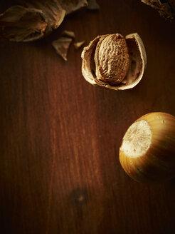 Hazelnut, Corylus avellana - HOEF000285