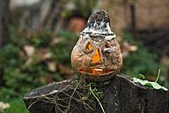 Halloween pumpkin in garden - DEGF000009