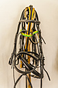 Bridles for horses in saddlery - TCF004324