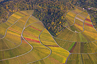 Germany, Baden-Wuerttemberg, Stuttgart, aerial view of vineyards at Rotenberg - WDF002778