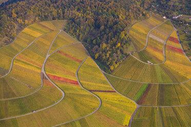 Germany, Baden-Wuerttemberg, Stuttgart, aerial view of vineyards at Rotenberg - WDF002778