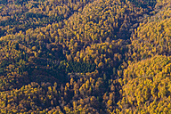 Germany, Baden-Wuerttemberg, aerial view of a forest in the Swabian mountains - WDF002786