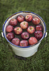 Apples in bucket with water in garden - ZEF002829