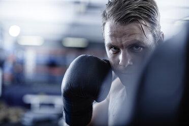 Boxer fighting - ZEF002637