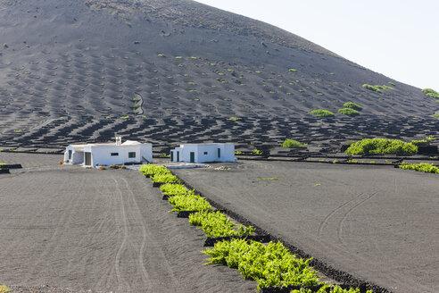 Spain, Canary Islands, Lanzarote, La Geria, viticulture at Volcanic landscape - AMF003430