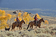 USA, Wyoming, Big Horn Mountains, riding cowboy and cowgirl in autumn - RUEF001301