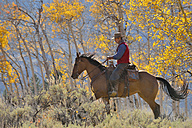 USA, Wyoming, Big Horn Mountains, riding cowboy in autumn - RUEF001304