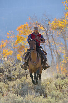 USA, Wyoming, Big Horn Mountains, riding cowboy in autumn - RUEF001306