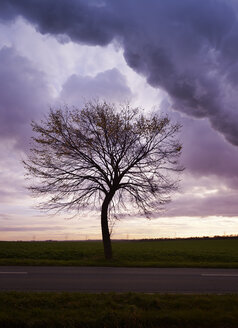 Silhouette of single bare tree in front of moody sky - GUFF000073