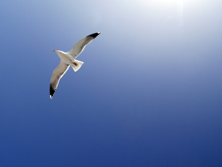 Flying seagull in front of blue sky - JMF000290