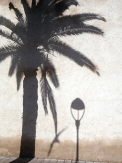 Shadows of palm, seagull and street lamp on facade - JMF000307
