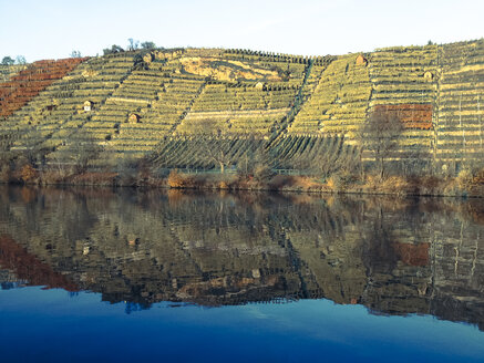 Germany, Stuttgart, Neckar River, Vinyards - WD002809