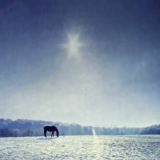 Germany, horse grazing on snow-covered pasture - DWIF000370