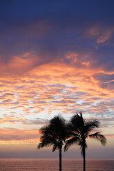 USA, Hawaii, Big Island, Kohala Coast, silhouettes of two palms at sunset - BRF000899