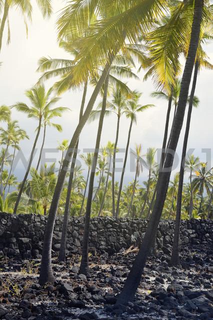 USA, Hawaii, Big Island, Honaunau-Napoopoo, palms, and igneous rock wall at Puuhonua o Honaunau - BRF000901