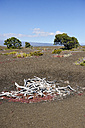 USA, Hawaii, Big Island, Volcanoes National Park, dead trees at Kilauea Iki crater - BRF000929