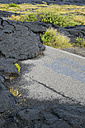 USA, Hawaii, Big Island, Volcanoes National Park, congealed lava on the lane of old Chain of Craters Road - BRF000943