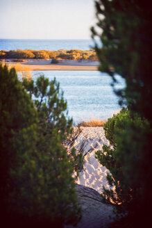 Spain, Andalusia, Huelva, view to the sea through trees - EH000051