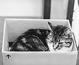 Tabby cat inside cardboard box - HL000830